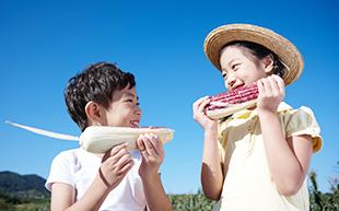 옥수수를 들고 있는 아이들